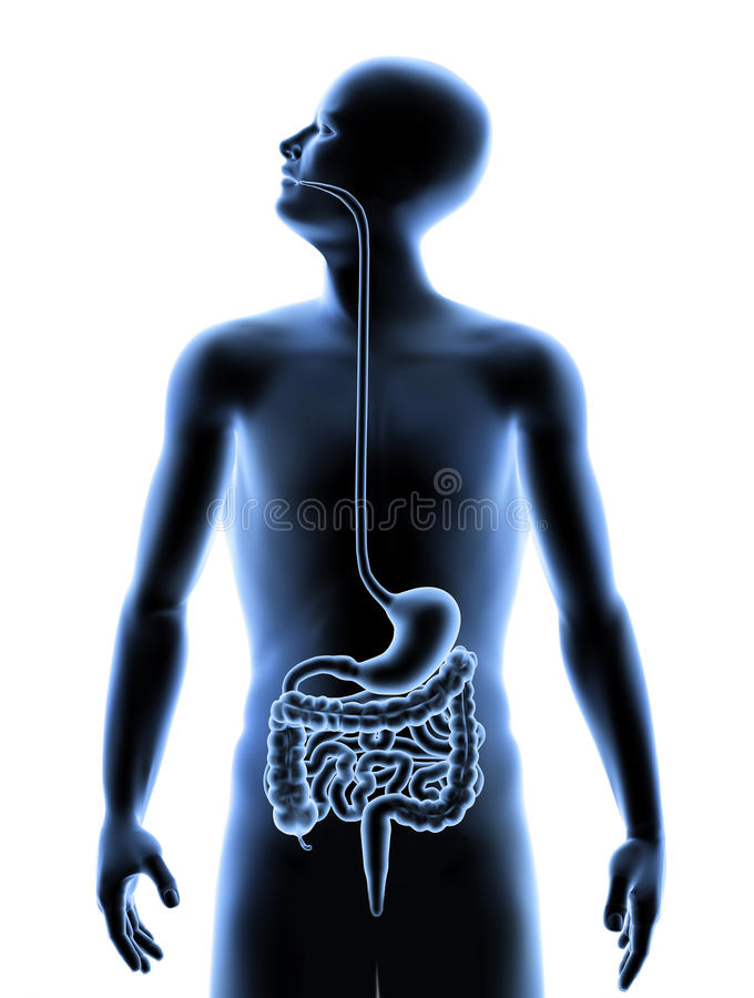 Download The Human Body - Digestive System Stock Illustration - Illustration of silhouette, health: 19792715