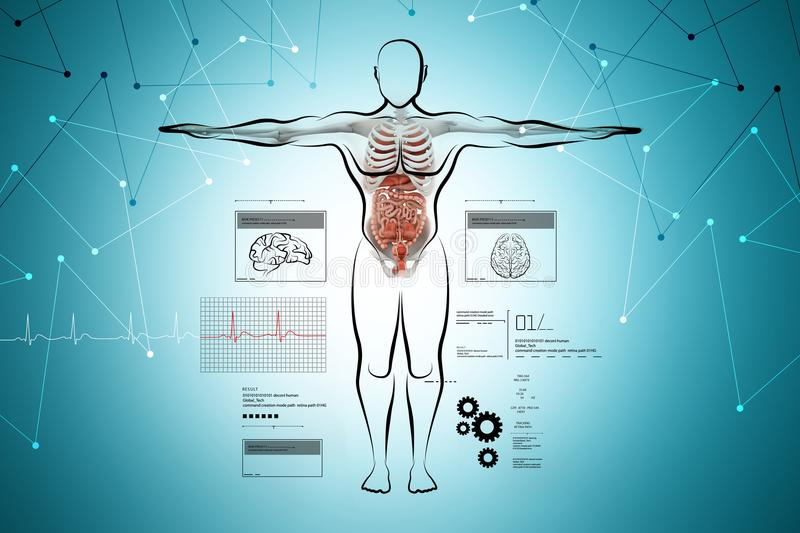 Human body with digestive system royalty free illustration