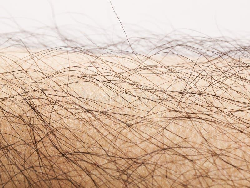 Human body hair. Close up of human body hair stock photos