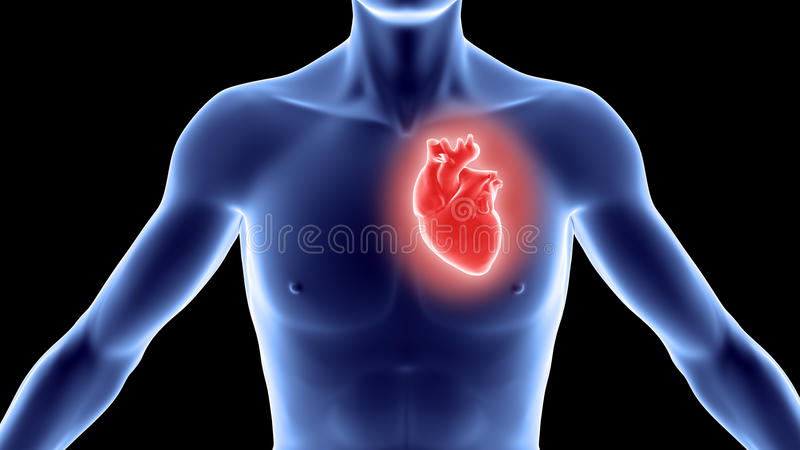 Human body with heart stock illustration