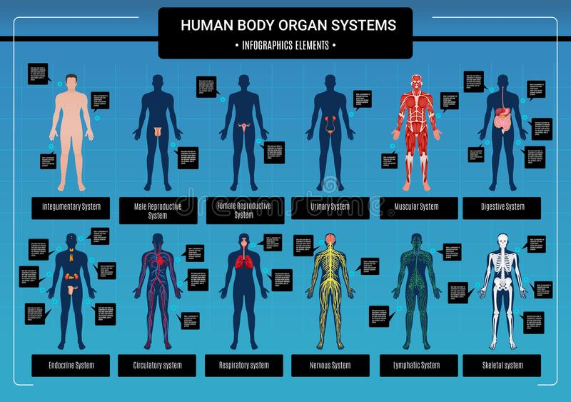 Human Body Infographics stock vector. Illustration of layout - 109804429