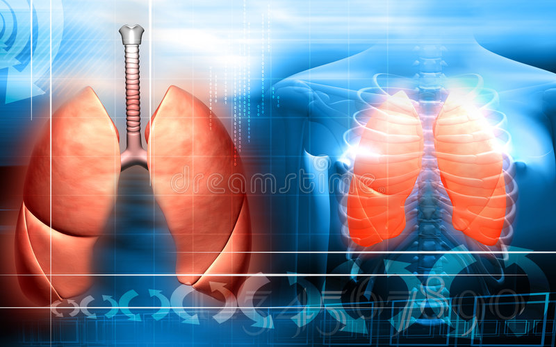 Human body and lungs vector illustration