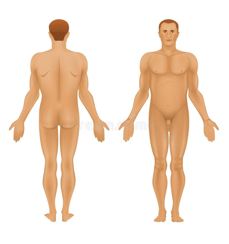 Download Human body of a man stock vector. Image of anatomic, body - 21276902