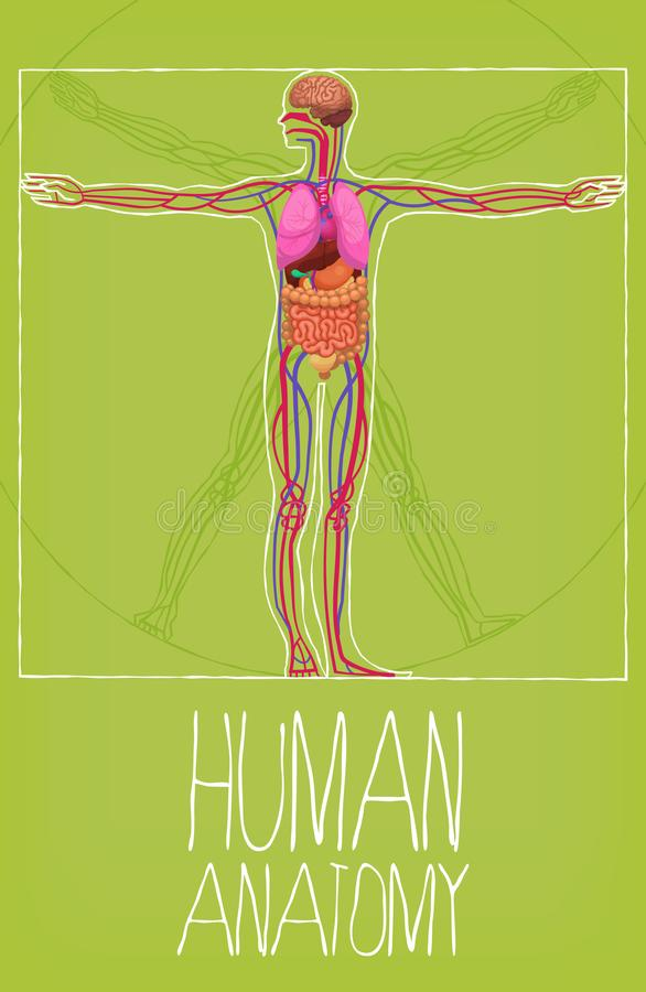 Human Body Organs Anatomy Ilustration Stock Vector - Illustration of ...