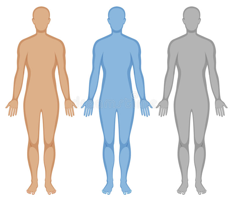 Human body outline in three colors royalty free illustration
