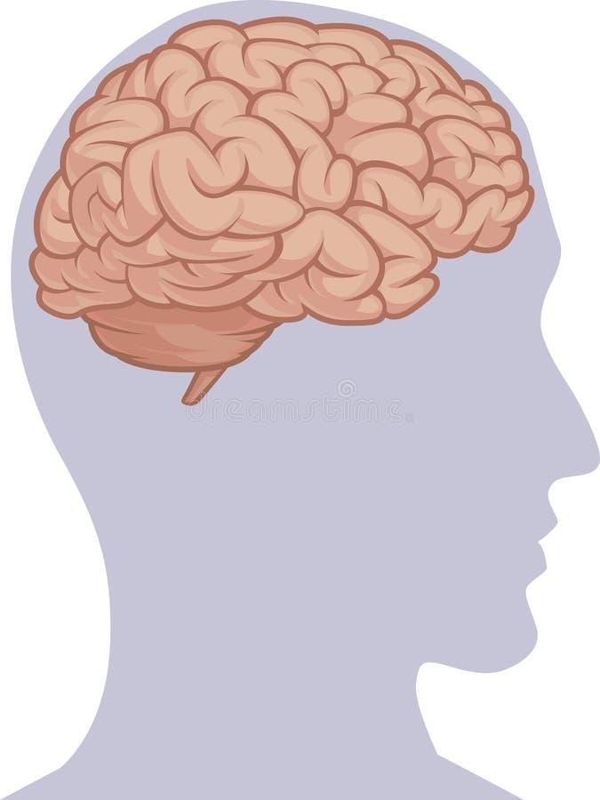 Human Body Part Brain Inside Head Silhouette Stock Vector