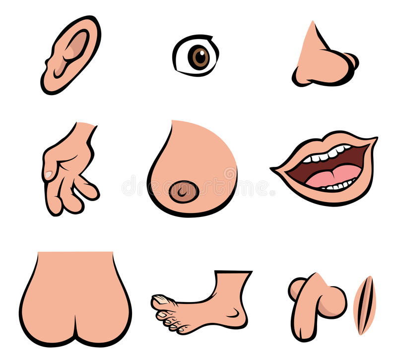 Human Body Parts Stock Vector Illustration Of Parts 12955852