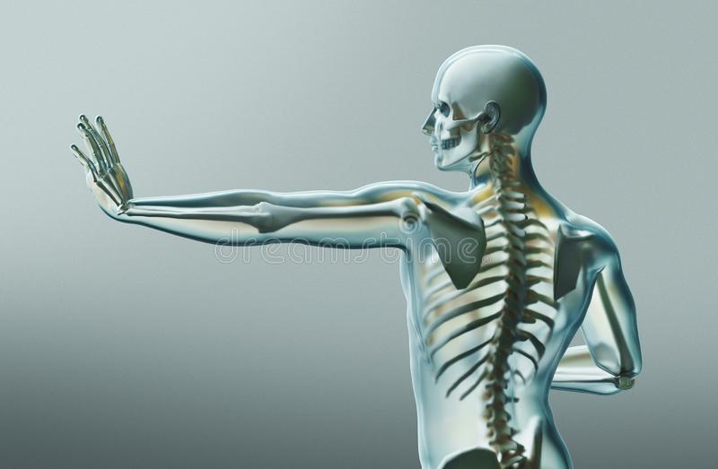 Human body parts, x ray, 3d rendering vector illustration