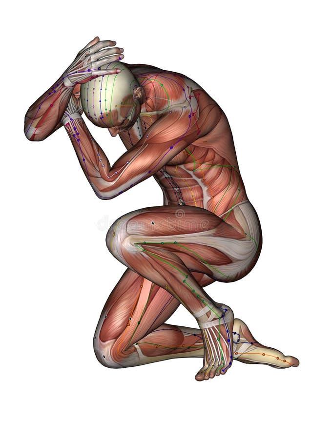 Human Body Pose Musc Acu Ab01 3d Model Stock Illustration