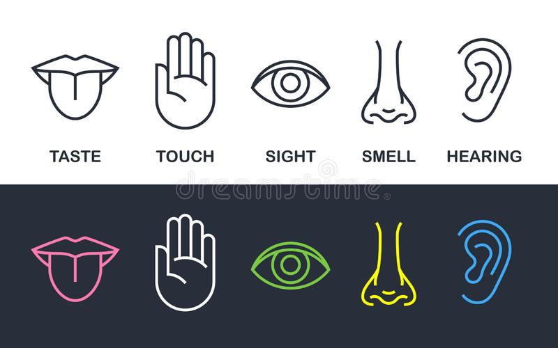 Human body senses line vector line icons royalty free illustration