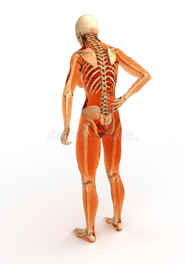 Human body with skeleton