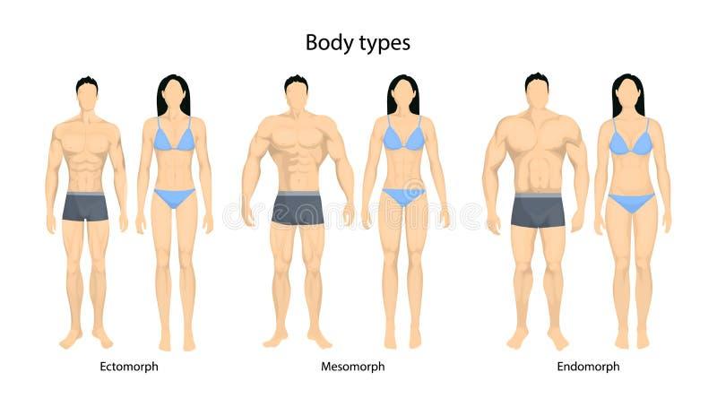 Human body types. Men and women as endomorph, ectomorph and mesomorph vector illustration