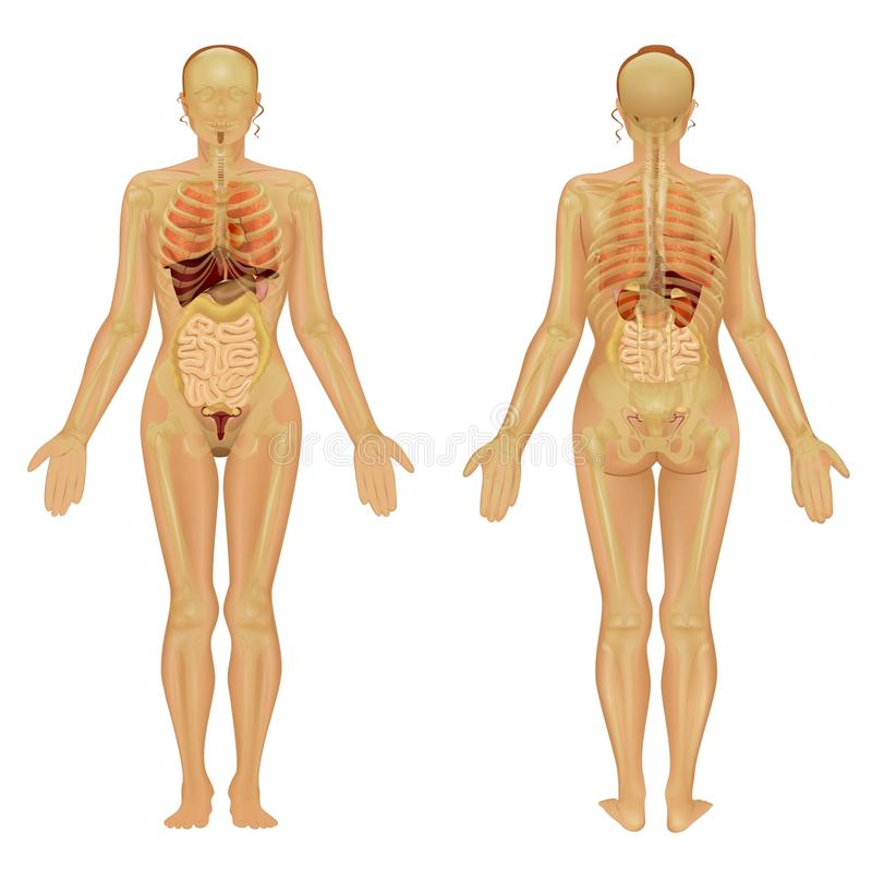 Download Human Body Of A Woman Stock Photo - Image: 21276930