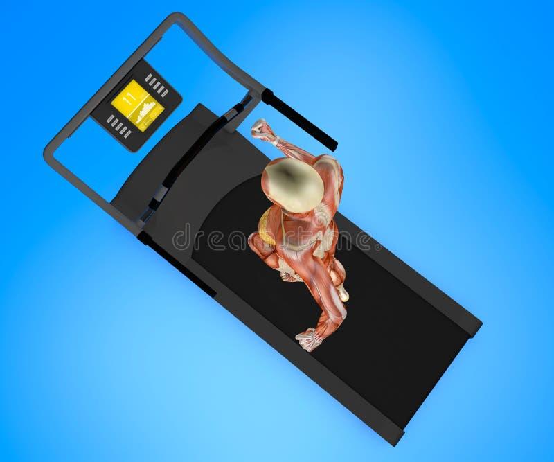 Human body, woman running, muscular system, treadmill, gym. Human body, woman running on a treadmill, muscular system, gym, gymnastics, 3d rendering stock illustration