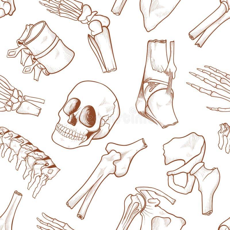 Human bone background stock vector. Illustration of isolated - 119704284