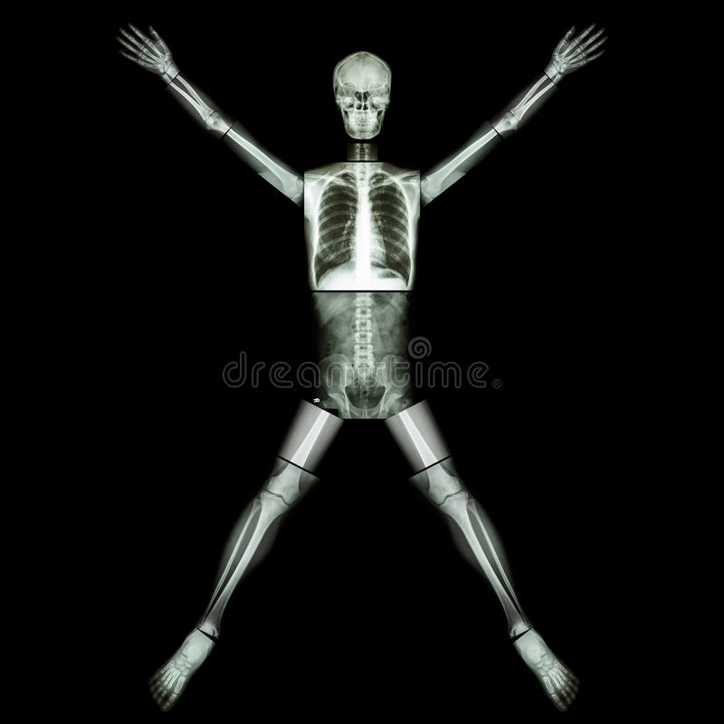 Human bone is stretching arm and leg (whole body : head neck spine back abdomen chest shoulder arm elbow forearm hand wrist lung. Heart pelvis hip thigh leg royalty free stock photo