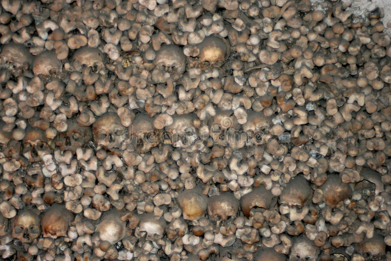 Download Human Bones Royalty Free Stock Images - Image: 779129