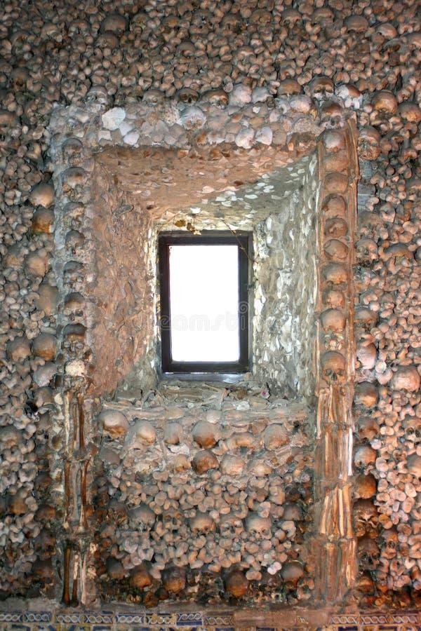 Human bones royalty free stock photography