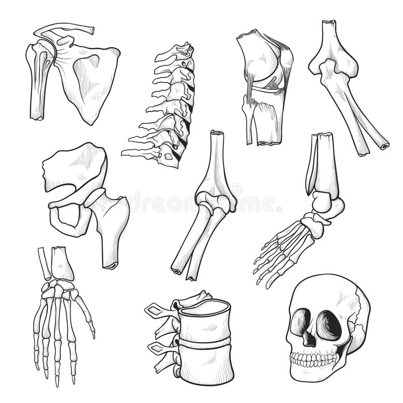 Human bones and joints sketch royalty free illustration