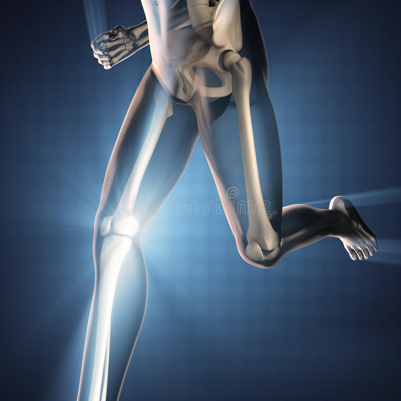 Human bones radiography scan image. 3d rendered stock photo
