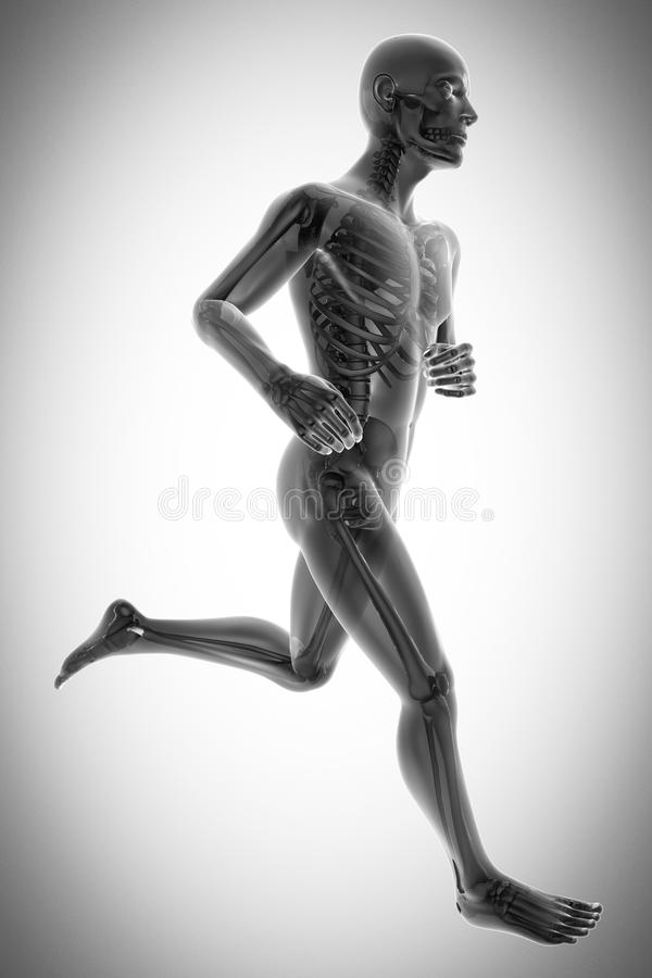 Human bones radiography scan image royalty free stock images