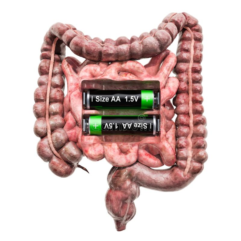 Human bowel with batteries. Recovery and treatment concept. 3D rendering. Isolated on white background royalty free illustration