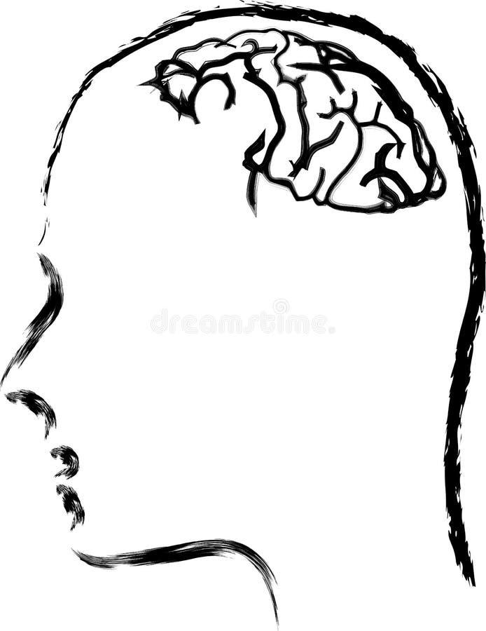 Download Human brain stock vector. Illustration of cortex, education - 21417583