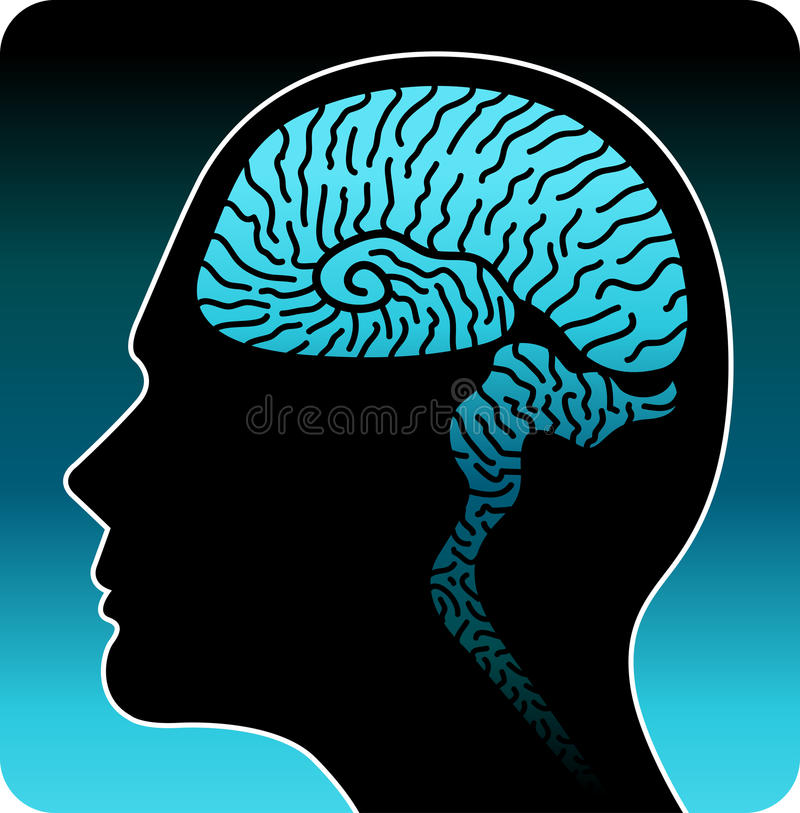 Download Human brain stock vector. Image of medical, cerebral - 22214308