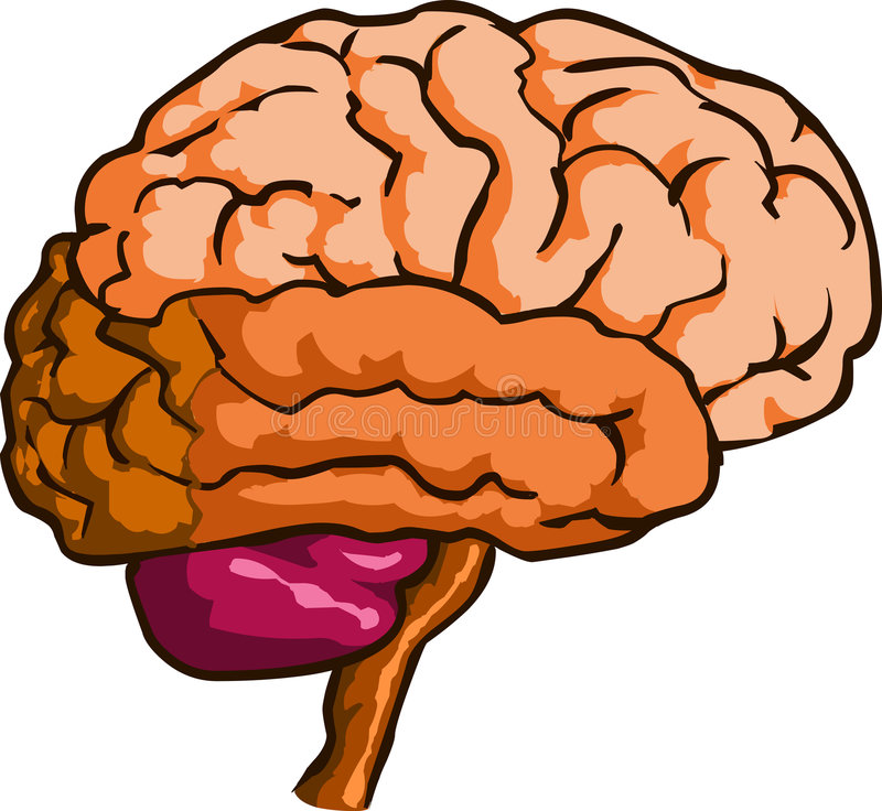 Download Human Brain stock vector. Illustration of command, icon - 2559336