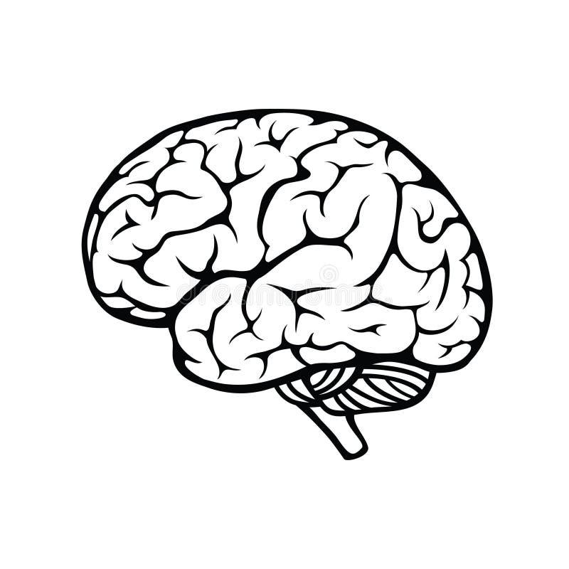 Free Human Brain Stock Image - 34191041