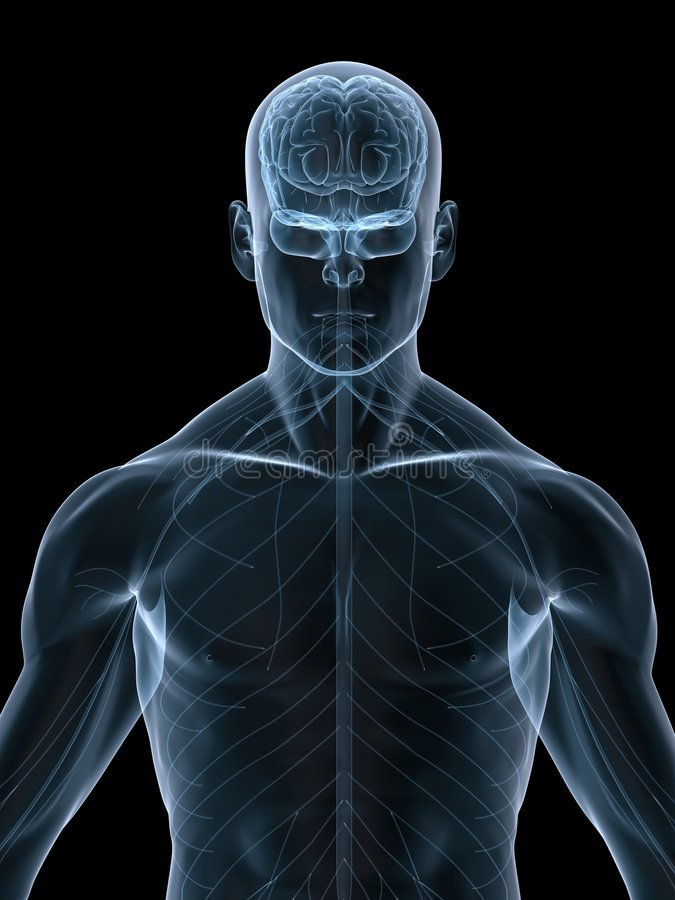 Download Human brain stock illustration. Illustration of nerves - 8690361