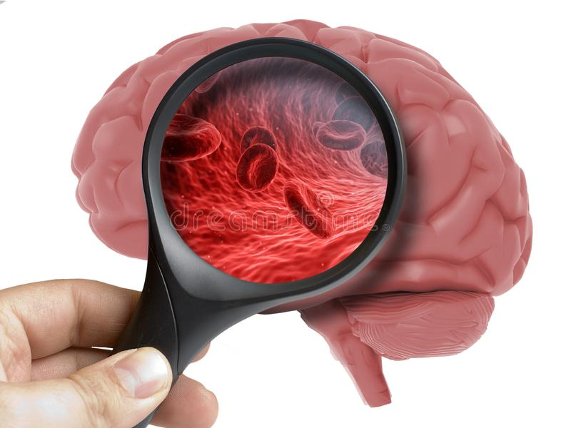 Human Brain Analyzed with magnifying blood cells inside isolated stock illustration