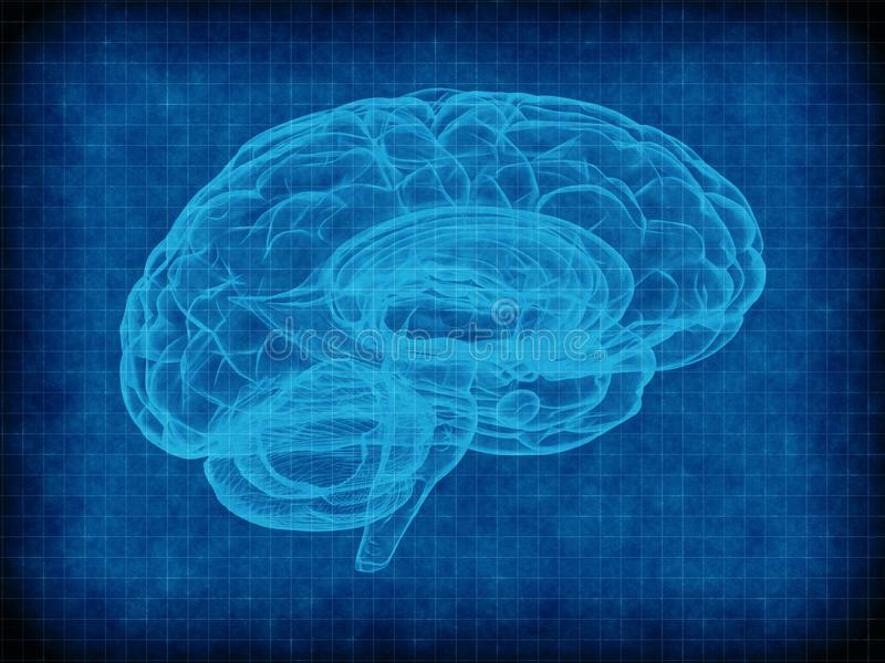 Human brain on blue background stock photography