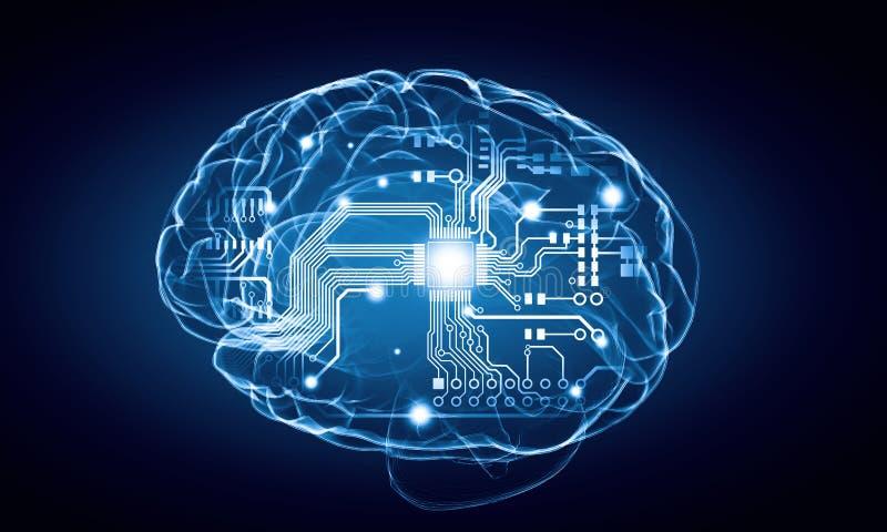 Human brain royalty free illustration