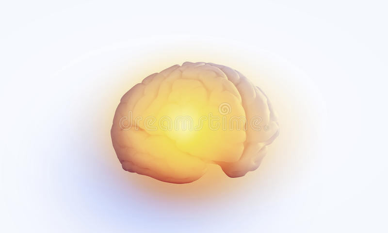 Human brain. Concept of human intelligence with human brain on white background royalty free stock images
