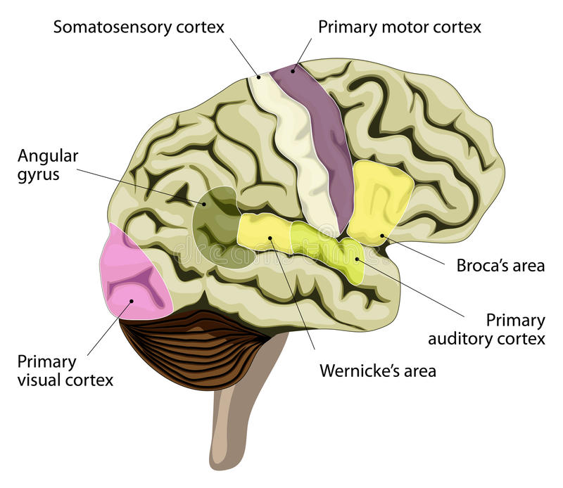 visual vector inversions in posterior parietal cortex pdf