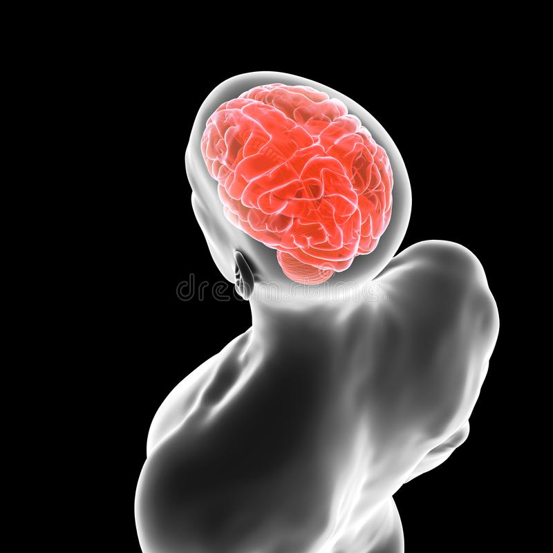 The human brain. 3d rendered medically accurate illustration of the human brain stock illustration