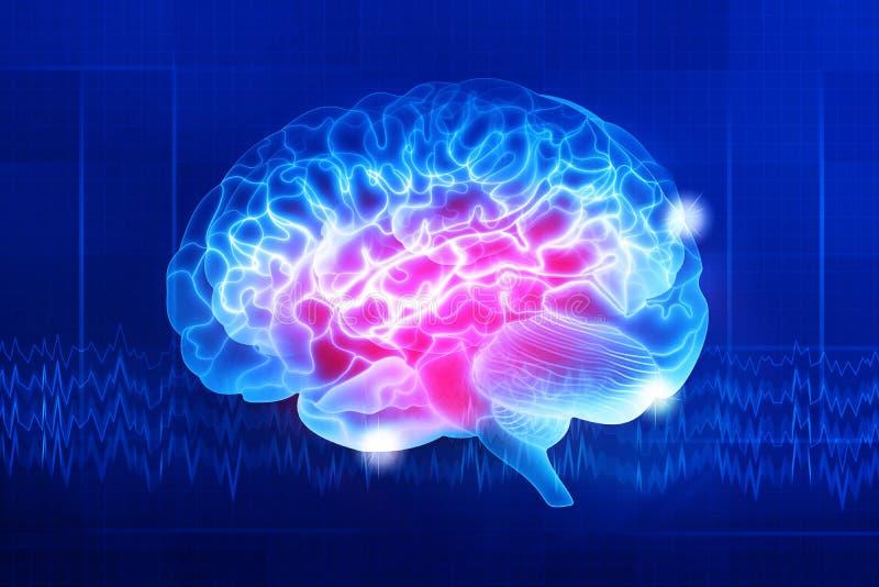 Human brain on a dark blue background. Human brain on a blue background. Active parts of the brain. Digital illustration stock illustration