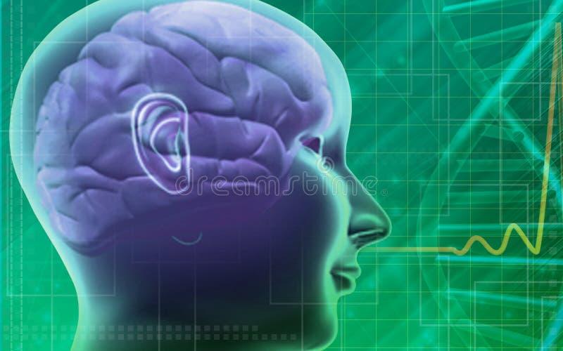 Human brain and DNA stock illustration