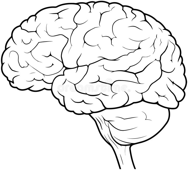 Line Drawing Brain : Human brain drawing stock illustration of