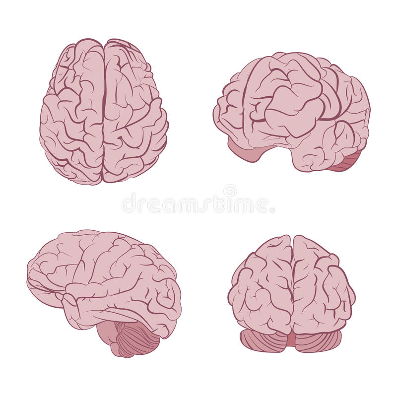 Human brain four views. Top, frontal, side, three-quarter. Flat brains vector icons royalty free illustration