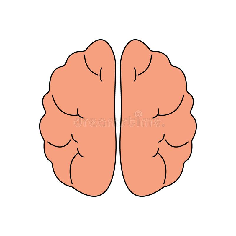 Human brain front view icon. Hnternal organs symbol. Vector illustration in cartoon style isolated on white background. 10 stock illustration