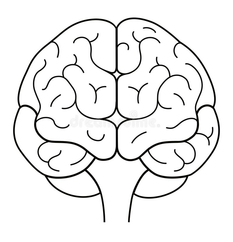 Free Human Brain Front View. Line Illustration Royalty Free Stock Photos - 172938018