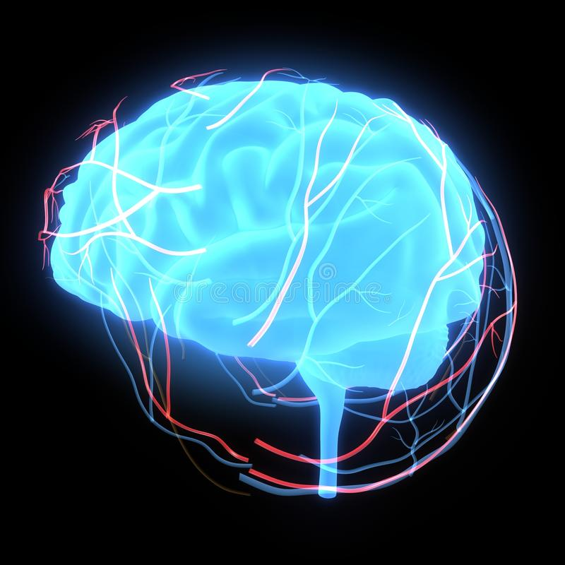 Human brain glow stock illustration illustration of left 44728889 the human brain has many properties that are common to all vertebrate brains including a basic division into three parts called the forebrain midbrain ccuart Images
