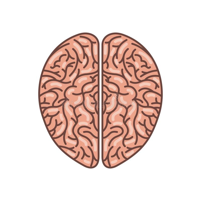 human brain icon royalty free illustration