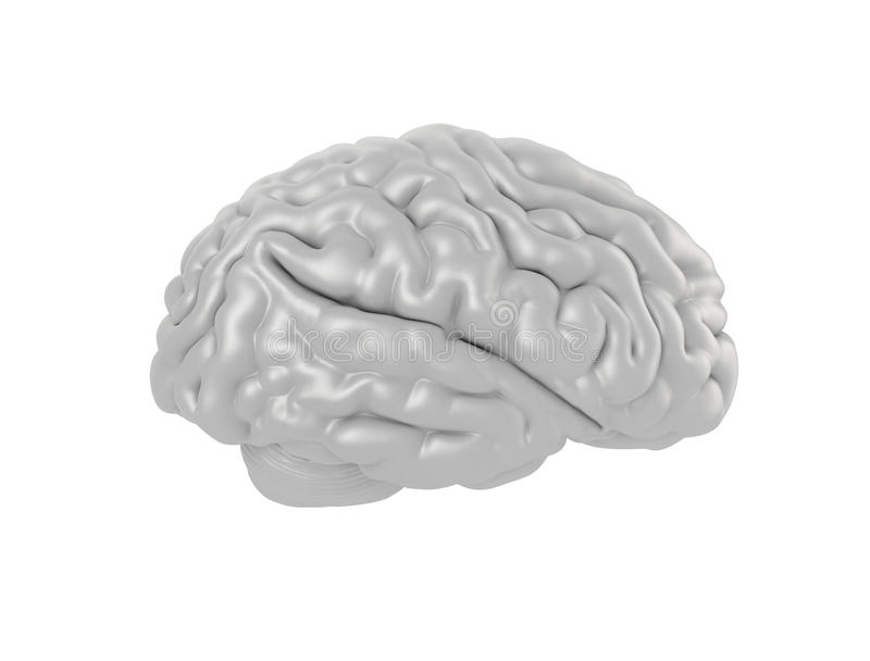 Human Brain Isolated stock image