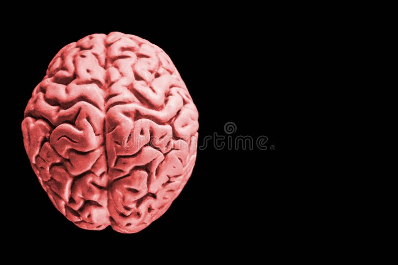 Human brain isolated on black background with free copy space for text or digital artwork design. a human brain isolated on white royalty free stock photography