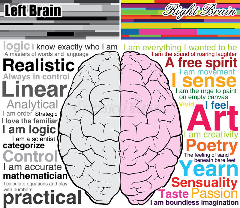 Human brain left and right, what you are vector illustration