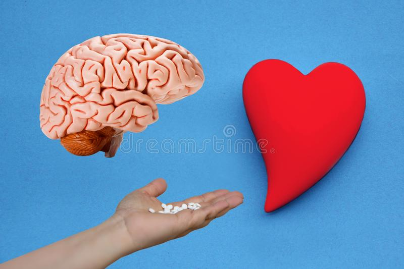 Human brain model, female hand with white pills and ceramic heart model on a blue background, concept of love and reason, close-up stock photo