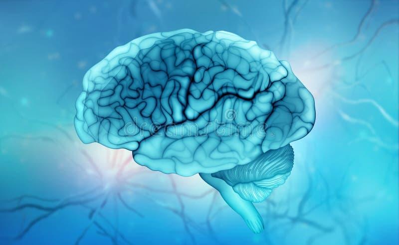 Human brain. Neural communications. Thinking, Intelligence, Mind, Creativity vector illustration